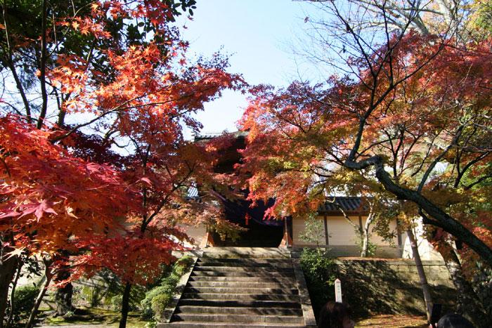 光明寺の紅葉