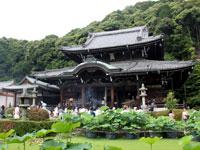 三室戸寺の紫陽花その1